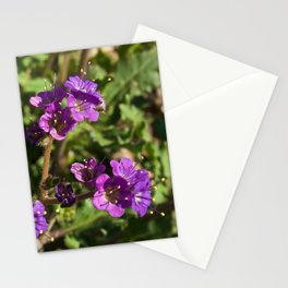 Notch-Leaved Phacelia - Desert Wildflower Stationery Cards