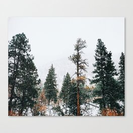 Snow Capped Pine Trees Canvas Print