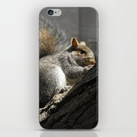 squirrel iPhone & iPod Skins featuring Squirrel by Mandy Becker