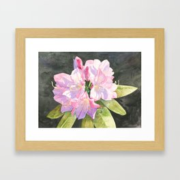 Pink Rhododendron Framed Art Print