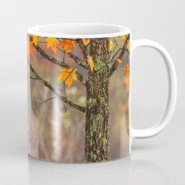 Autumn In Connecticut Coffee Mug