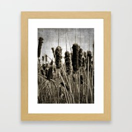 cattails Framed Art Print