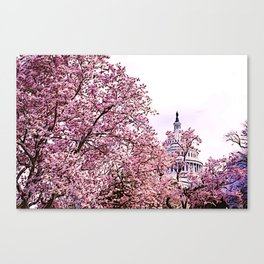 US Capitol Amid Cherry Blossoms II Canvas Print