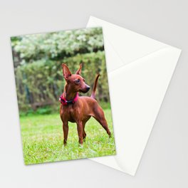 Outdoor portrait of a red miniature pinscher dog standing on the grass Stationery Cards