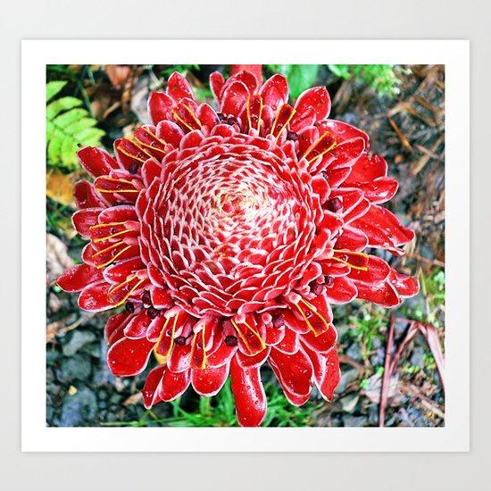 Hawaii - Exotic Beauty Art Print