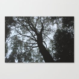 Stevens Glen VII Canvas Print