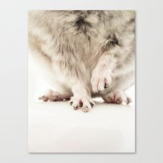 Chinchilla Hands = The Cutest Hands Canvas Print