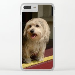 Storefront Dog Clear iPhone Case