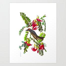 Piping Flycatcher Bird Art Print