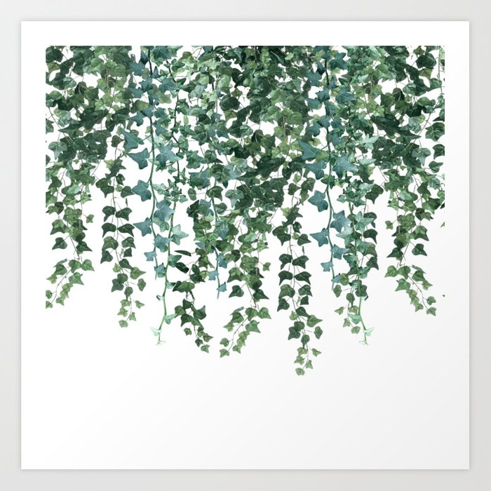 Ivy Vine Drop Art Print