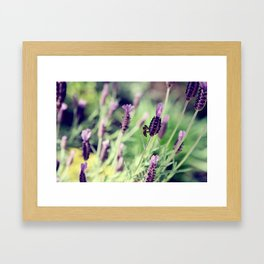 Lavender and Honey Framed Art Print