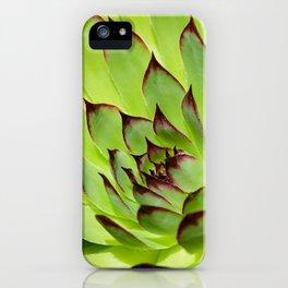 Flower succulent plant iPhone Case