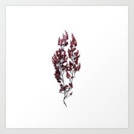 British Sea Weed Art Print