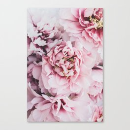 Pink Blush Peonies Canvas Print