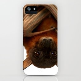Little Red Flying Fox Hanging Out  iPhone Case