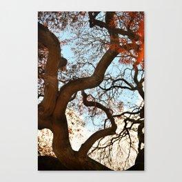 Purple Japanese Maple Canvas Print