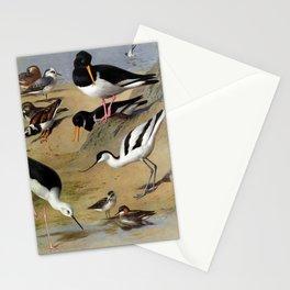 Grey Phalarope Turnstone Oyster catcher Avocet6 Stationery Cards
