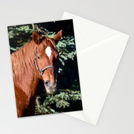 Miss Sadie - A horse, of course Stationery Cards