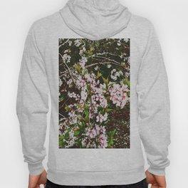Apple Blossoms Hoody
