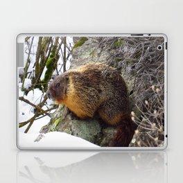 Winter Marmot Laptop & iPad Skin