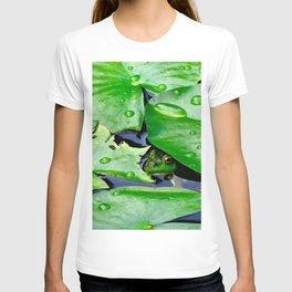 Peek  A Boo frog T-shirt