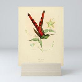 sapho phaon Mini Art Print