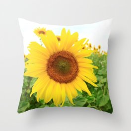 Sonnenblumen 3 Throw Pillow