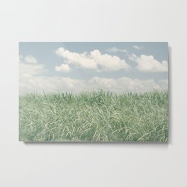 sugar cane field 2 Metal Print