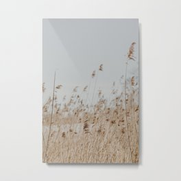 Reed | Fine Art Photography Metal Print