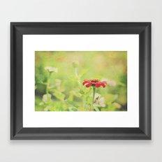 Red Flower on a Summer Morning Framed Art Print