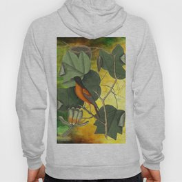 Baltimore Oriole on Tulip Tree, Vintage Natural History and Botanical Hoody