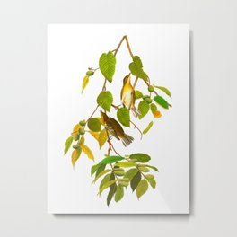 Autumnal Warbler Bird Metal Print