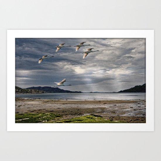Swans on a Scottish Loch Art Print