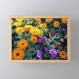 Marigold and Sweet William Framed Mini Art Print