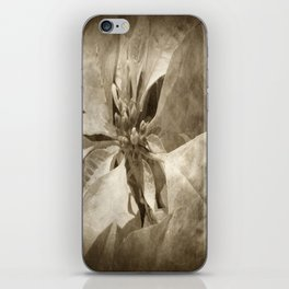 Pale Yellow Poinsettia 1 Antiqued iPhone Skin