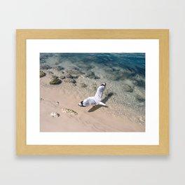 Gold Coast Seagull Framed Art Print