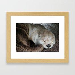 Sleeping Otter in a Log Framed Art Print