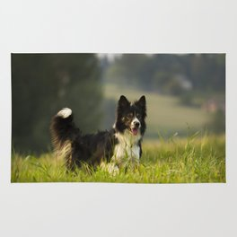 Border Collie In A Field Rug