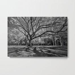 Big Tree Branches Metal Print