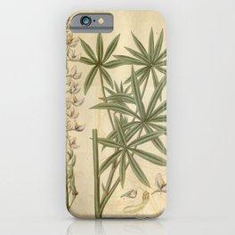 Flower 3283 lupinus incanus Hoary Lupine1 iPhone Case