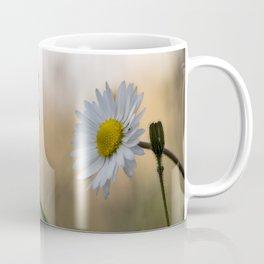 Sunset daisy flowers Coffee Mug