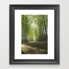Forests of Versaille Framed Art Print