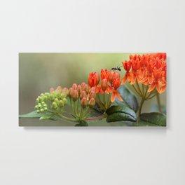 Butterfly Weed Metal Print