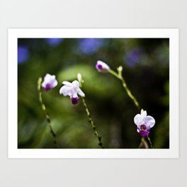 Dendrobium Bokeh Art Print