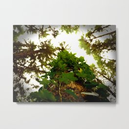 Woodland Vines Metal Print