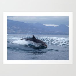 Wild and free bottlenose dolphin Art Print