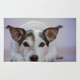 J.R Terrier Rug