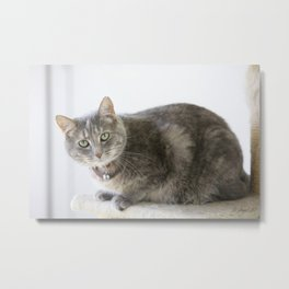Miss Kitty Metal Print