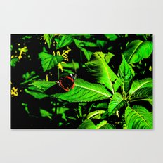 Butterfly rest on leave Canvas Print