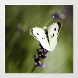 Butterfly Dream 2 (Square) Canvas Print